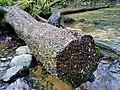 Fairy Glen - geograph.org.uk - 692690.jpg
