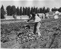 Farming at Duckwater Reservation (Idaho and Nevada). John Billy (Piaute). - NARA - 298646.tif