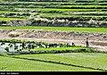 Fars Province 2020 (17).jpg