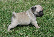 Image Result For K Dog Training