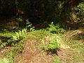 Ferns (475877708).jpg