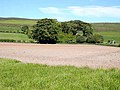 Field and Scrabby Wood - geograph.org.uk - 1331933.jpg