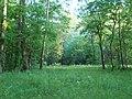 Field and Trees - panoramio.jpg