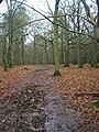 Flatroper's Wood - geograph.org.uk - 335222.jpg