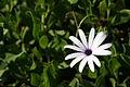Fleur de Camargue.jpg