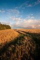 Flickr - Laenulfean - the field.jpg