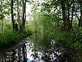 Flooded path in the Teufelsbruch swamp 2.jpg