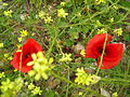 Flora Oued Zitoun7.JPG