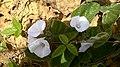 Flores do Campo-Ba,.jpg