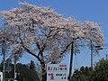 Flower - panoramio (23).jpg