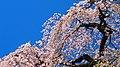 Flower - panoramio (37).jpg
