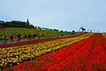 Flower Field OCT East.jpg
