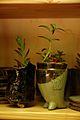 Flowerpots (9654103730).jpg