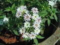 Flowers (74).JPG