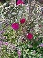 Flowers 74.jpg