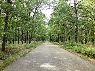 Foloi oak forest - Image: Foloi road 1