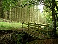 Footbridge, Tappit-hen Wood - geograph.org.uk - 587023.jpg