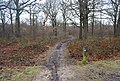 Footpath, Church Woods - geograph.org.uk - 1132495.jpg
