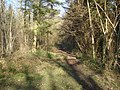 Footpath in Beacon Hill Wood - geograph.org.uk - 759321.jpg