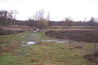 Hothfield Common