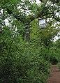 Footpath through Silk Wood in late summer - geograph.org.uk - 544731.jpg