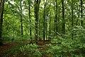 Forêt de Mormal 04.jpg