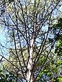 Forêt de la Coubre 006.jpg