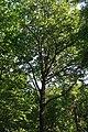 Forêt domaniale de Bois-d'Arcy 71.jpg