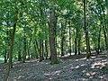 Forest - panoramio - paulnasca (62).jpg