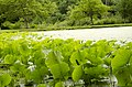Forest Park, Springfield, MA 01108, USA - panoramio (36).jpg