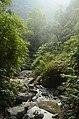 Forest in East Khashi hills district JEG7530.jpg