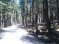 Forest road 2010-06-08.jpg