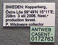 Formica aquilonia casent0172763 label 1.jpg