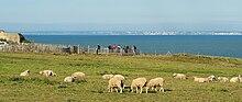Le bianche scogliere di Dover viste dalla Francia.