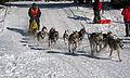 Frauenwald, Hundeschlittenrennen, 2.jpg