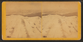 Frost work on Mt. Washington, by Kilburn Brothers 4.png