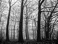 Fruens Plantage - panoramio (11).jpg