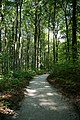 Fußweg Felsengarten Sanspareil 04082019 013.jpg