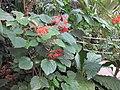 Gardenology.org-IMG 1703 hunt09oct.jpg