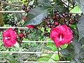 Gardenology.org-IMG 1780 hunt09oct.jpg