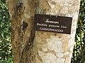 Gardenology.org-IMG 7082 qsbg11mar.jpg