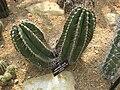Gardenology.org-IMG 7454 qsbg11mar.jpg
