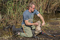 Gator caught in rope- wildlife tech removes, NPS Photo (9102105916).jpg