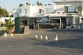 Geese in Naoussa on Paros go to yacht harbor, 119154.jpg