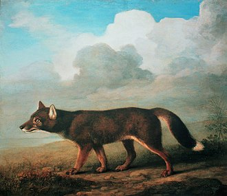 "Dingo - ""Portrait of a Large Dog from New Holland"" by George Stubbs, 1772"