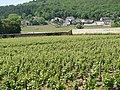 Gevrey-Chambertin, vineyard - panoramio.jpg