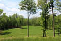 Gfp-pennsylvania-elk-scenic-trail-clearing-with-trees.jpg