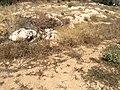 Ggantija, Gozo 98.jpg