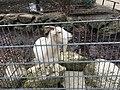 Goat petting zoo ulm.jpg
