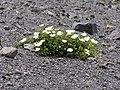Gran Cratere05.jpg